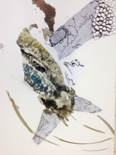 Newfoundland residency drawings, maps, ink, ecology #5